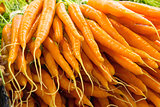Bunches of Carrots Closeup