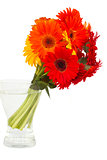 gerbera flowers posy  in vase