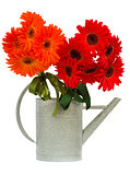 red and orange gerbera flowers
