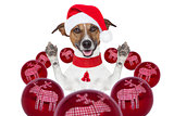 christmas dog with santa hat and balls
