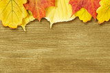 Different autumn leaves opn gold wood plank