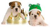 prince and the frog