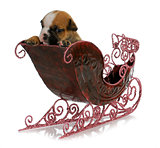 puppy in a sleigh