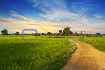 country road in green rice field