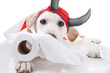 Halloween Devil Dog