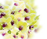 Yellow And Purple Orchid Flowers