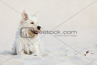 White dog on the beach
