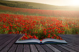 Creative concept pages of book Stunning poppy field landscape
