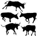 Collection of Bull Silhouette