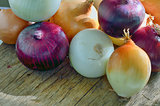 Onions different types, sizes and colors