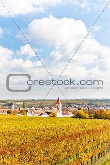 autumnal vineyards in Retz region, Lower Austria, Austria
