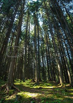 Forest in Trentino Alto Adige
