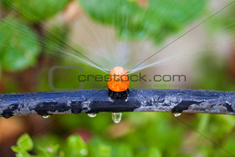 Watering plants and grass by nozzle
