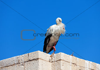 Stork on the wall