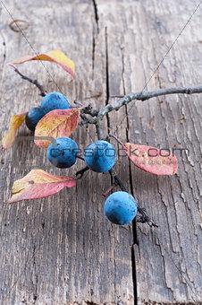 Sloe berry