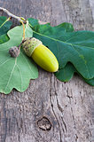 Acorn with an oak leaf