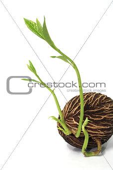 Grow seed
