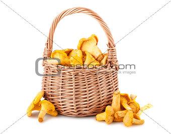 Chanterelle mushrooms in basket