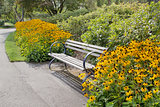 Park Bench with Black-Eyed Susan Flowers