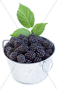 Fresh blackberries in small bucket