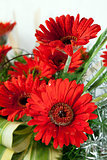 Red daisy flowers