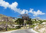 Summer  Llogara pass (Albania)