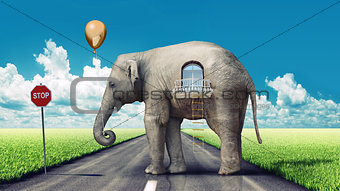 elephant-house on the road
