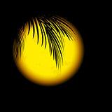 Tropic Night