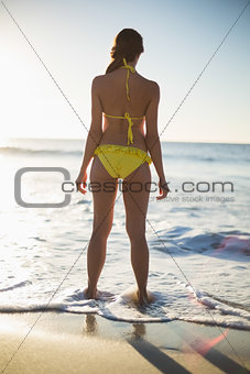Rear view of attractive woman in bikini
