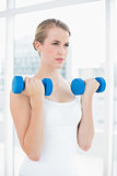 Concentrated fit woman exercising with dumbbells
