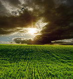 agricultural green field and dramatic sunset