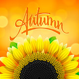Autumn background with sunflower, vector Eps10 illustration.