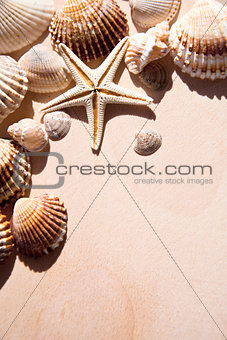 sea shells and star closeup