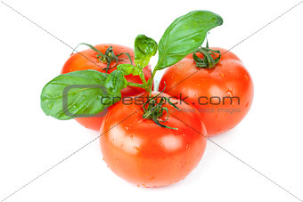 Three tomatoes with basil leafs