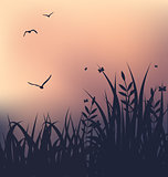 Sunset with grass and flying seagulls
