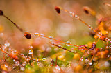 Grass moss and water drops