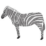 Cute pattern zebra
