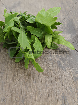 tied bunch of fresh arugula