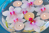burning  candles and pink  orchid flowers