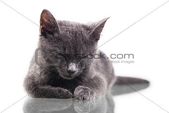 Chatreaux Kitten Sleeping