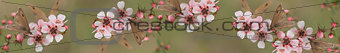 Panoramic Australiana banner butterfly and leptospernum flowers of Australia