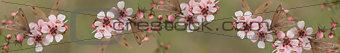 Panoramic Australiana banner butterfly and leptospernum flowers of Australia