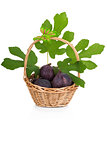 Busket of fresh figs with leaves on white