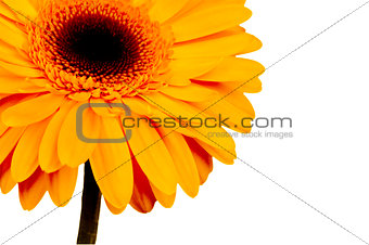 beautiful yellow flowe