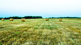 Hay bales in harvested field