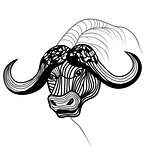 Buffalo bull head vector animal illustration for t-shirt.