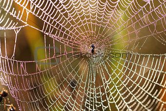 Beautiful Wide Web