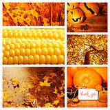 Autumn season collage