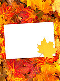 Background with autumn leaves and paper