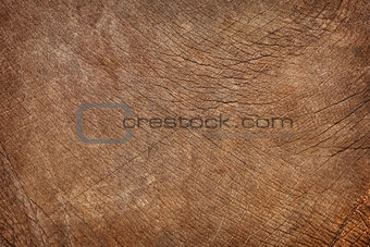 Skin of young elephant - natural background